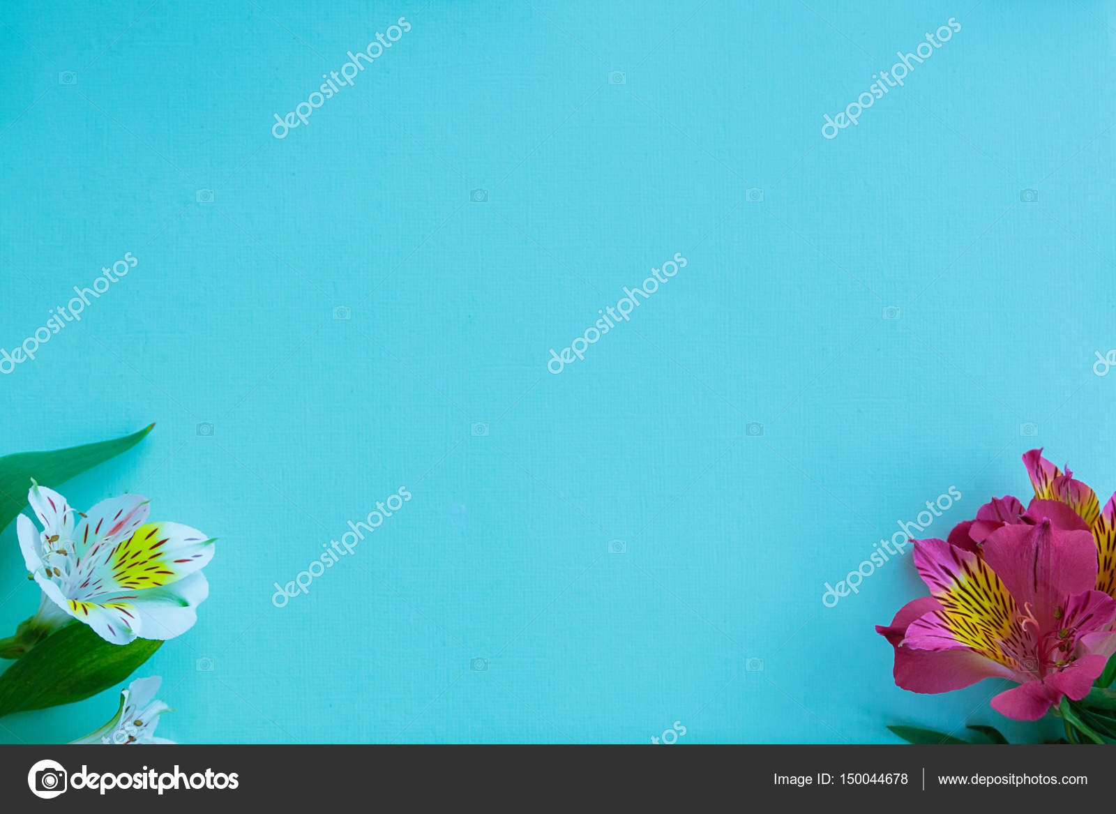Summer and spring background purple and white alstroemeria flowers purple and white alstroemeria flowers on a blue background free izmirmasajfo