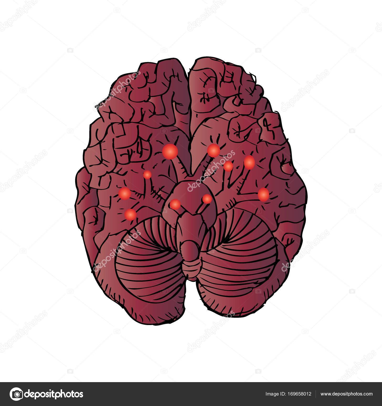 Incompleta de los nervios craneales — Foto de stock © Handini #169658012