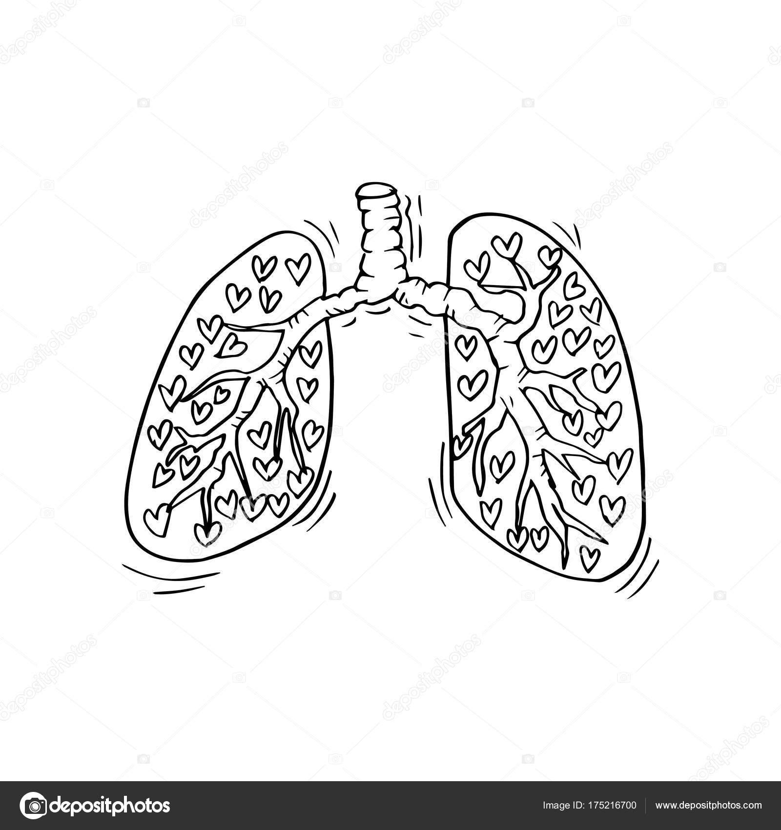 Doodle Insan Akciğer Stok Foto Handini 175216700