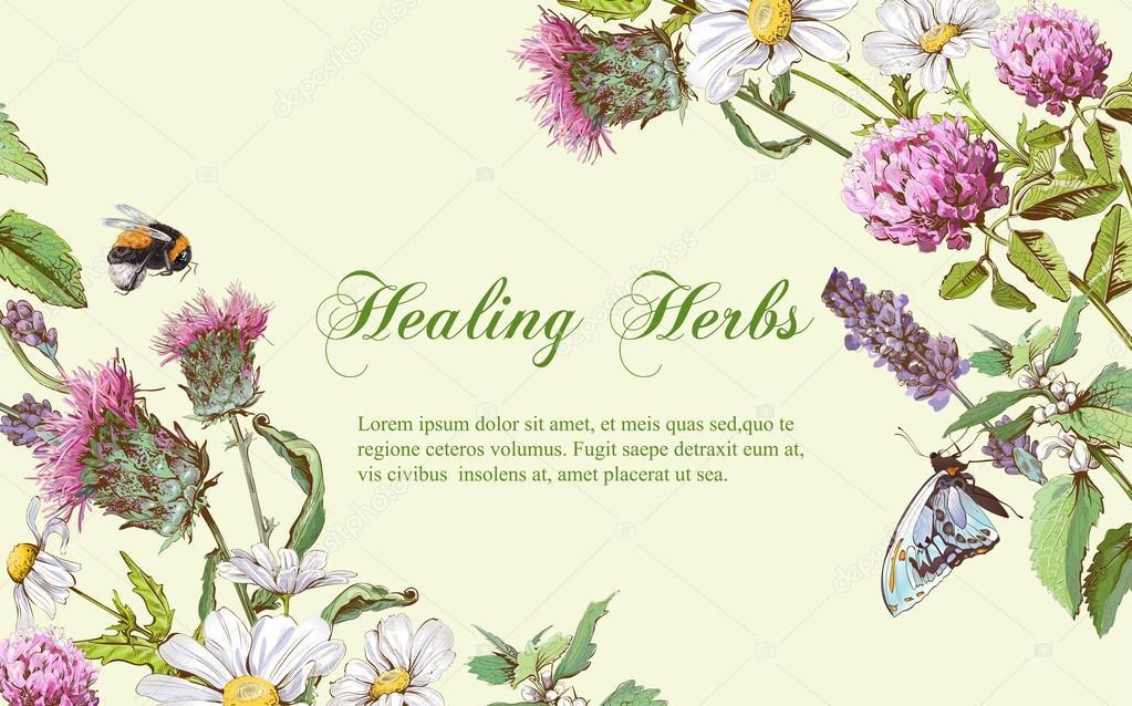 Vector Herbal Banner Stock Vector C Purplebird18 125007066