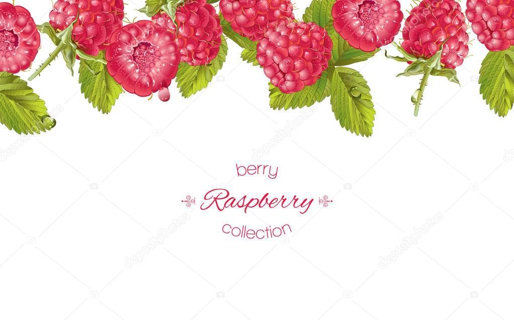 Raspberry horizontal banner