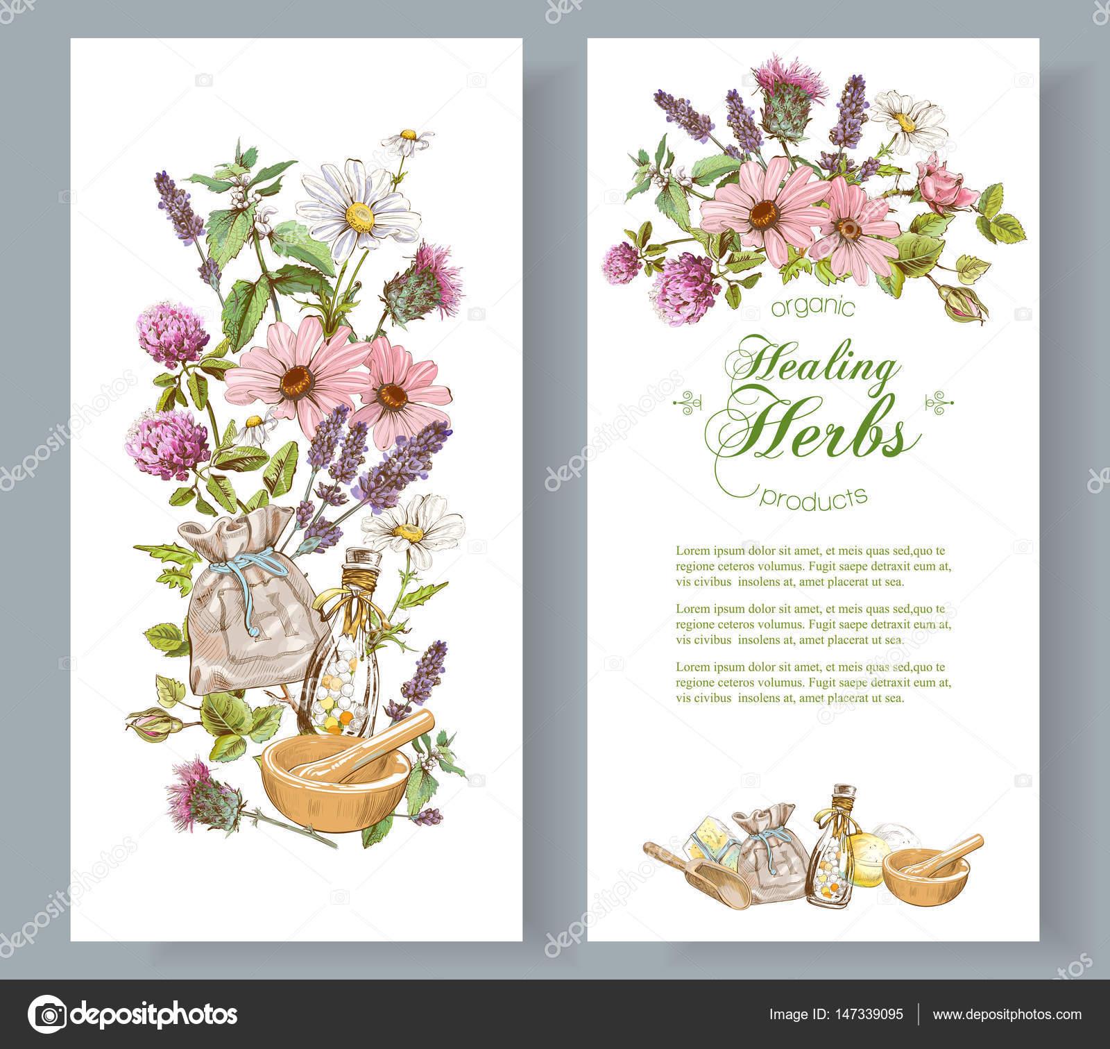 Vector Herbal Banner Stock Vector C Purplebird18 147339095