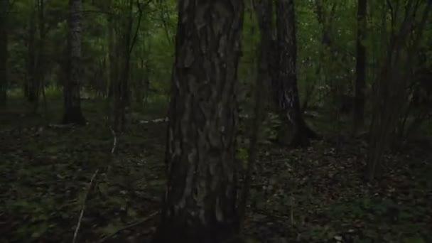 Armáda v lese seděla v pasti nedaleko stromu. Voják skrývající se za stromem v zeleném křoví
