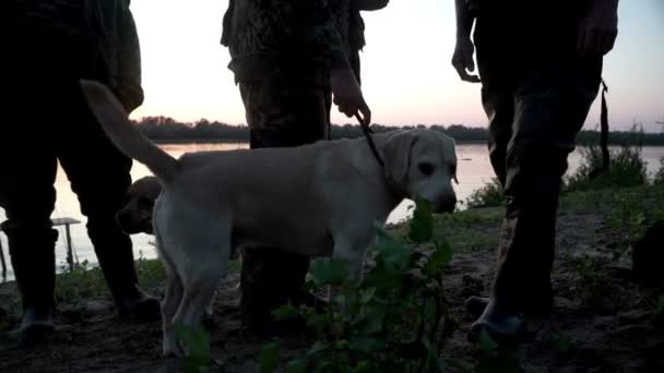Two labrador retriever standing next owner legs. Dog and owner resting outdoor