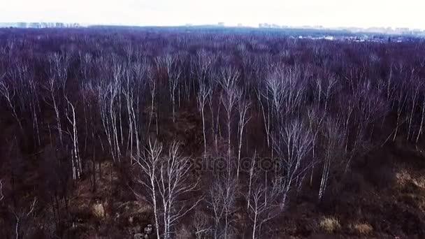 Letecká krajina holé stromy bez listí v podzimním lese v předvečer zimní sezóny