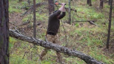 Lumberjack chopping wood in the forest