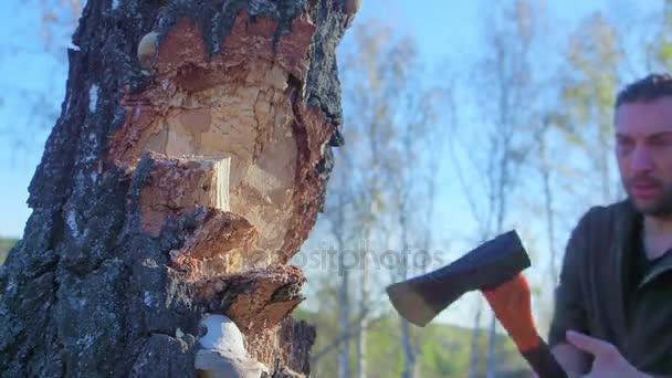 Pracovník dřevorubec kácí stromy zlomení mnoho třísek v lese s velkou sekerou. Silný zdravý dospělý báječný muž s velkými svaly pracují s velkou sekerou venku