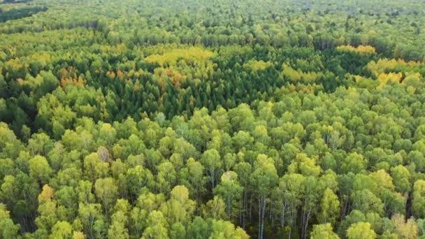 Letecké panorama. Let dronem nad krásným podzimním lesem.