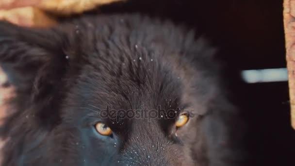 Giocoso giovane cane ibrido in canile. Inverno