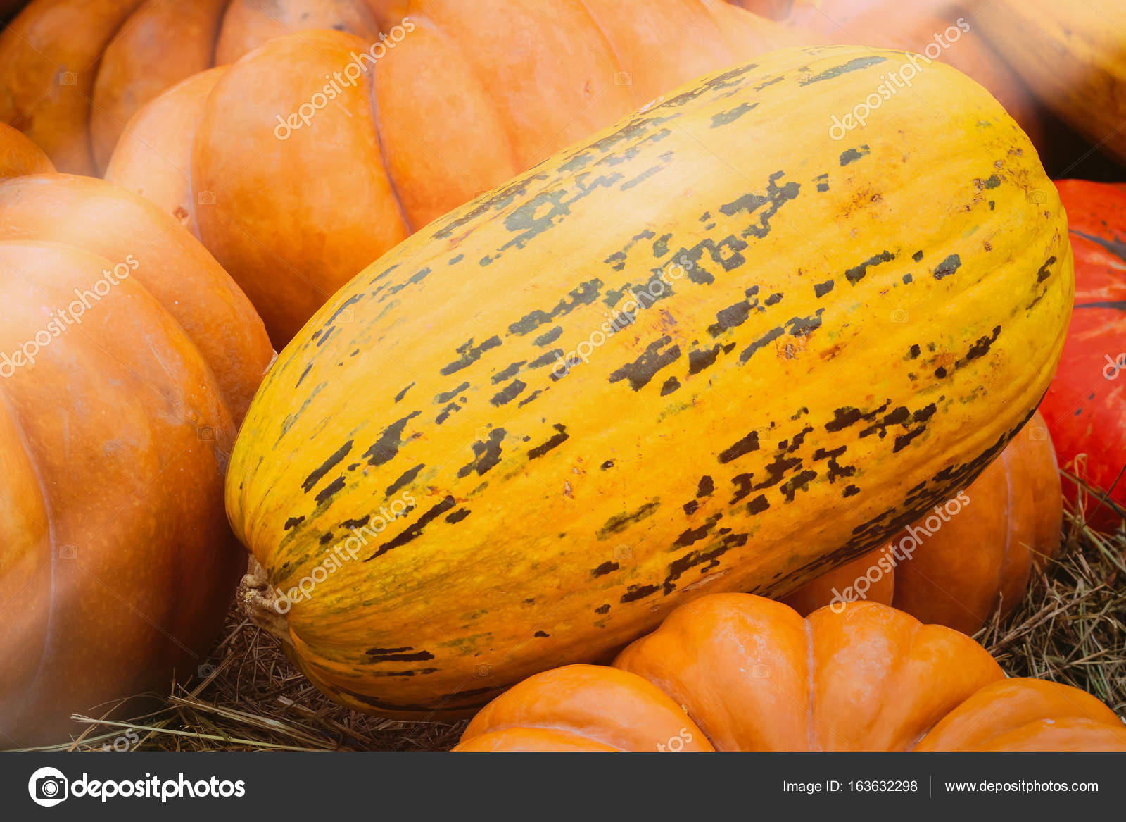 Close Up Ripe Long Yellow Organic Pumpkin Vintage Colours Rustic Fall Background Photo By SvetlanaIs