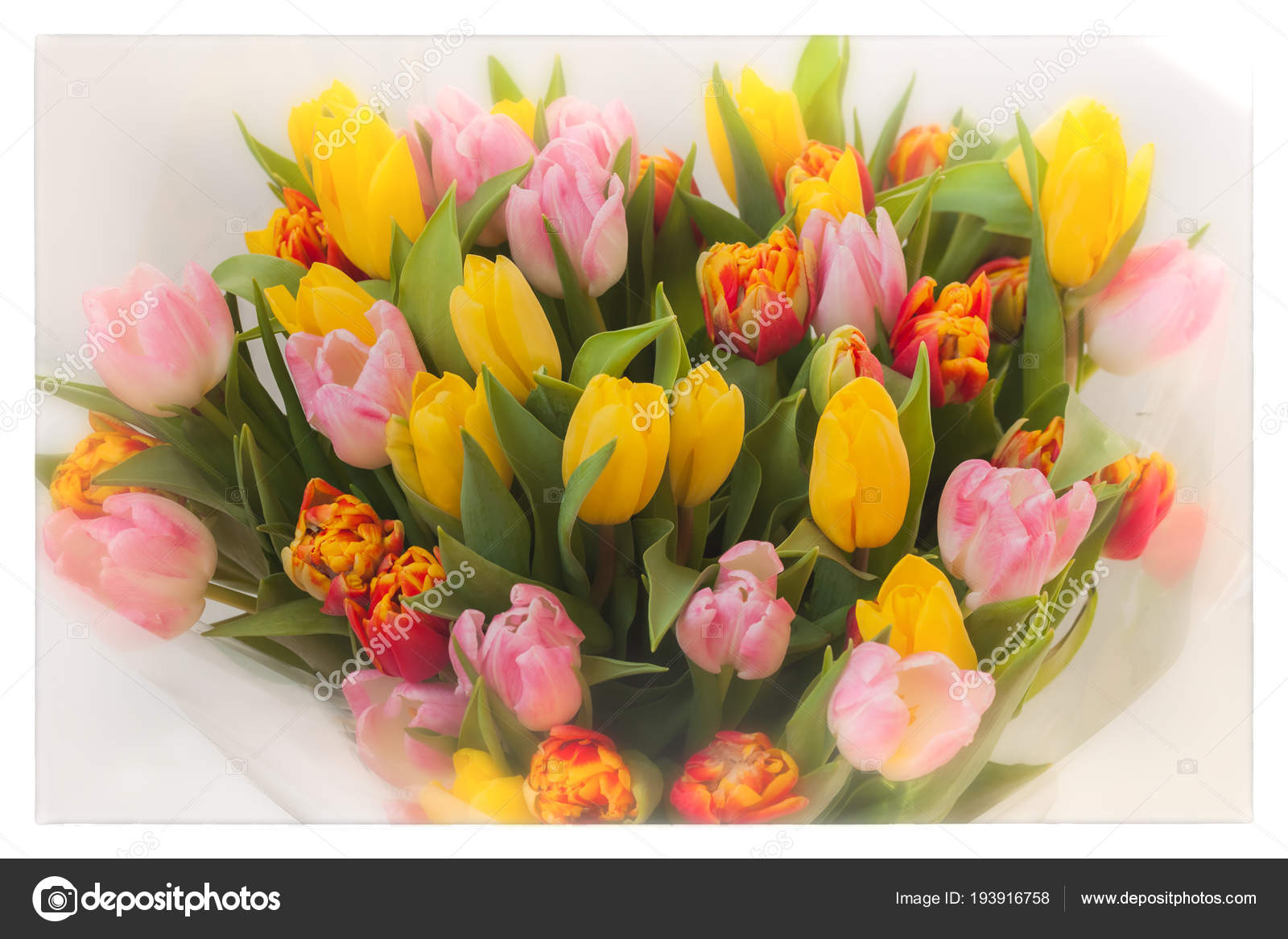 Flowers Tulips Bouquet Colored Bouquets Of Tulips Greeting Card
