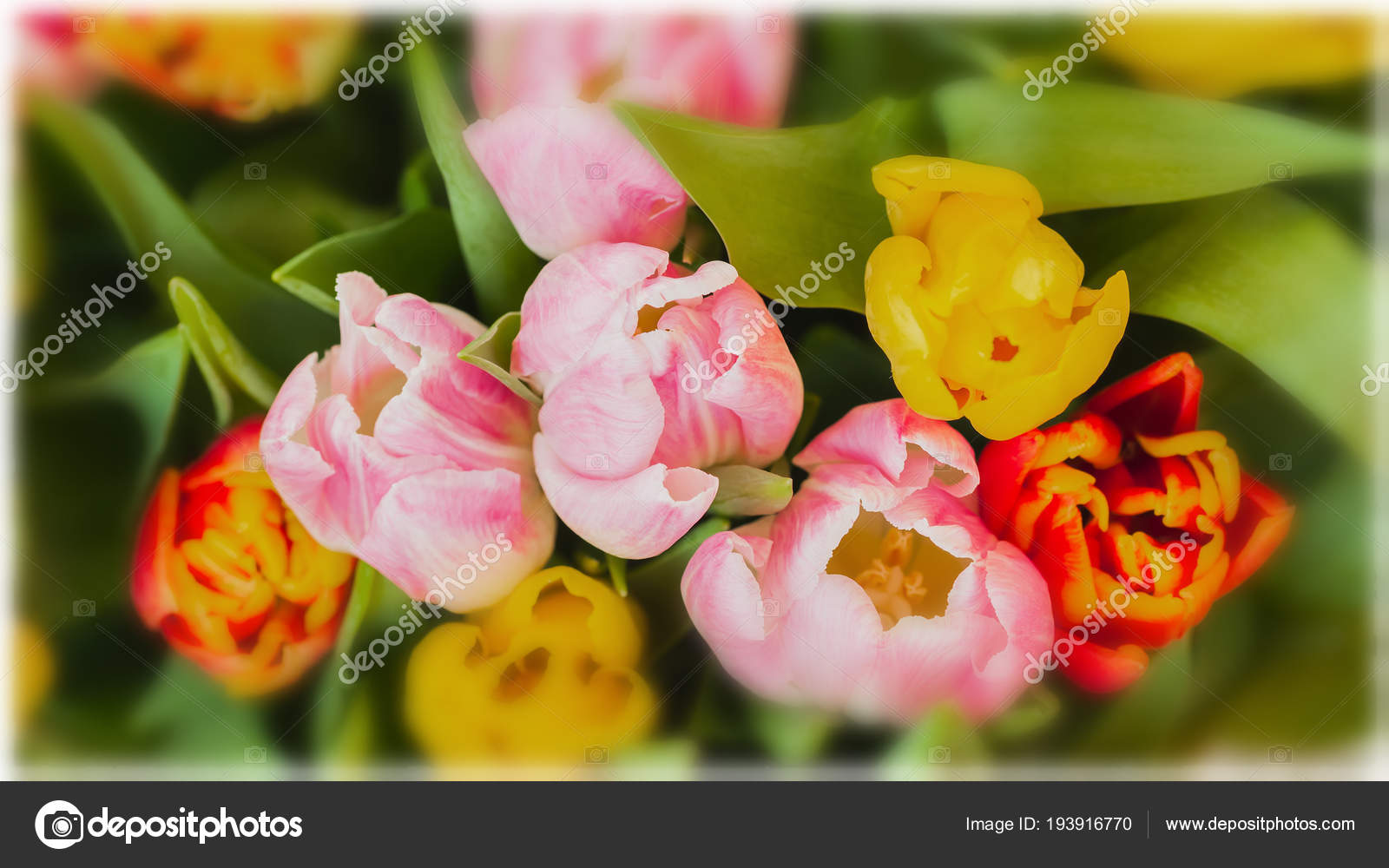 Flowers Tulips Colored Bouquets Of Tulips Top View Greeting Card