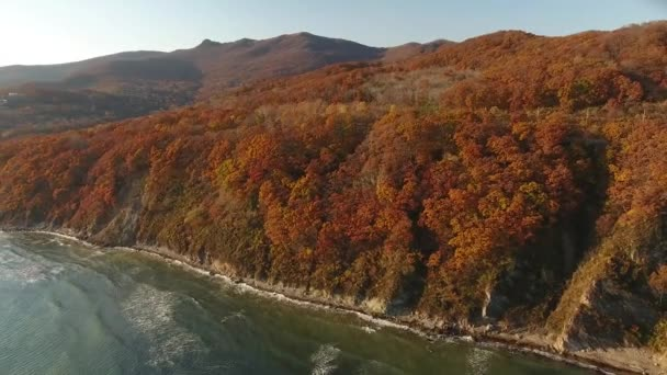 Beautiful colorful Autumn in Vladivostok Russia Primorsky krai. Yellow and Red tree leafs waves Mountains rock. Ocean sunset.