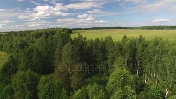 Autentickou přírodou Rusko. Stromy a lesní obloha s mraky pole