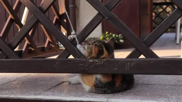 Wunderschöne farbige Kätzchen spielt mit Schnur zwischen Holzzaun und Besitzer. Ihre Augen leuchten vor Freude. Verspielte Katze in Pergola lügt, springt und tobt.