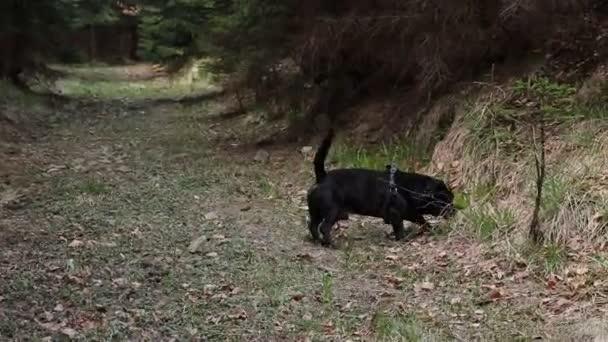 Starý ďáblův posel v psím těle jí trávu pro lepší trávení. Putování v Beskydech společně s nejlepším přítelem člověka