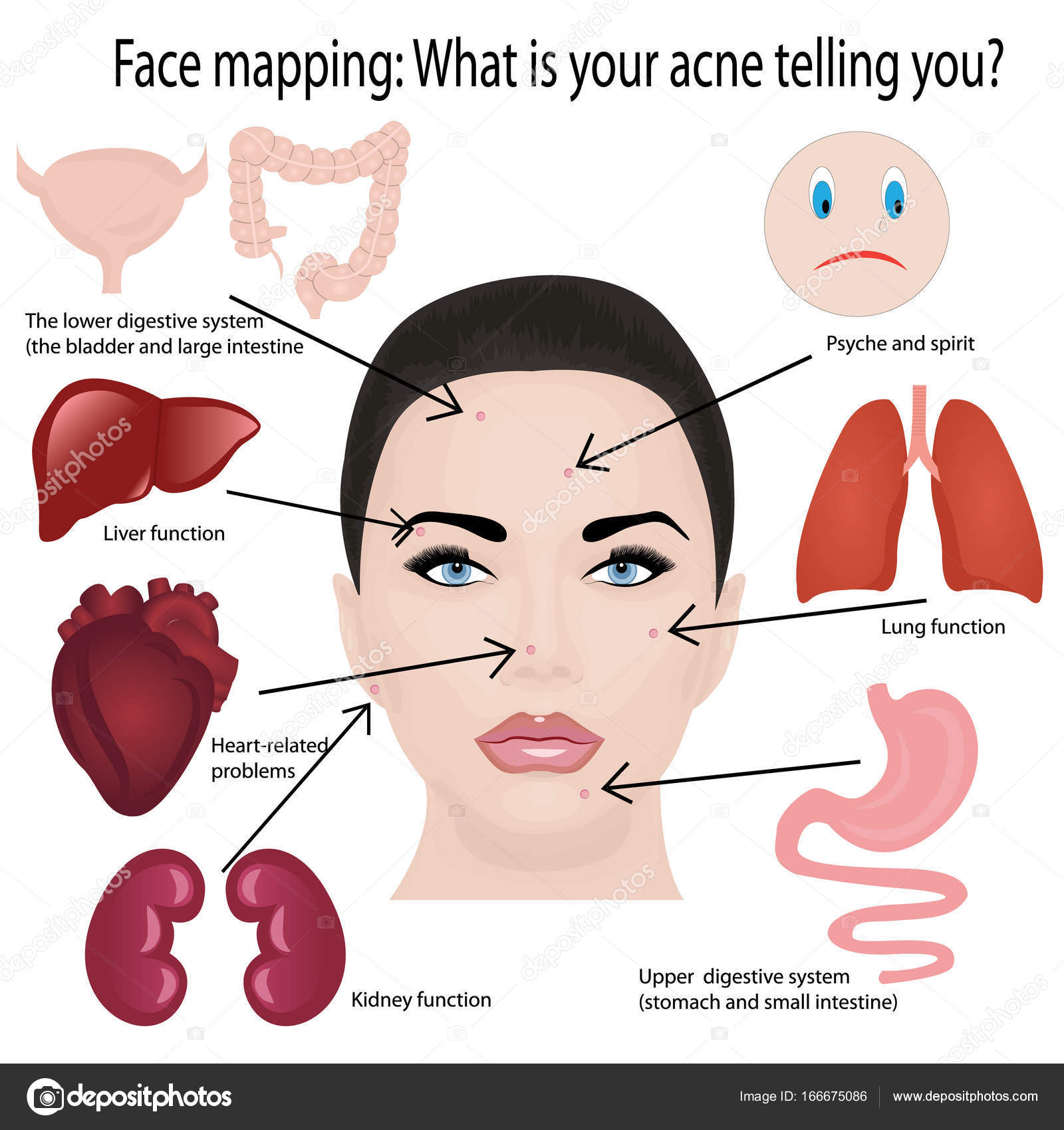 Face Map Gwc Map Avatar Map - Face map for acne