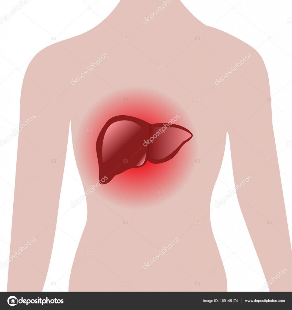 hígado dolorido en un cuerpo humano — Vector de stock © crazy ...