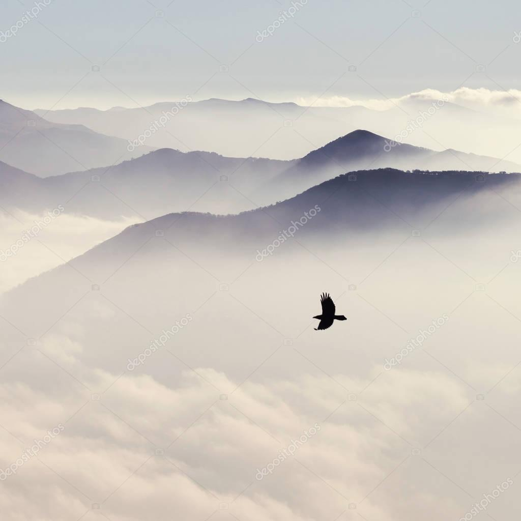mountains in mist and bird