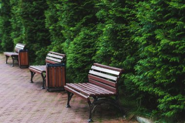 Benches in summer park