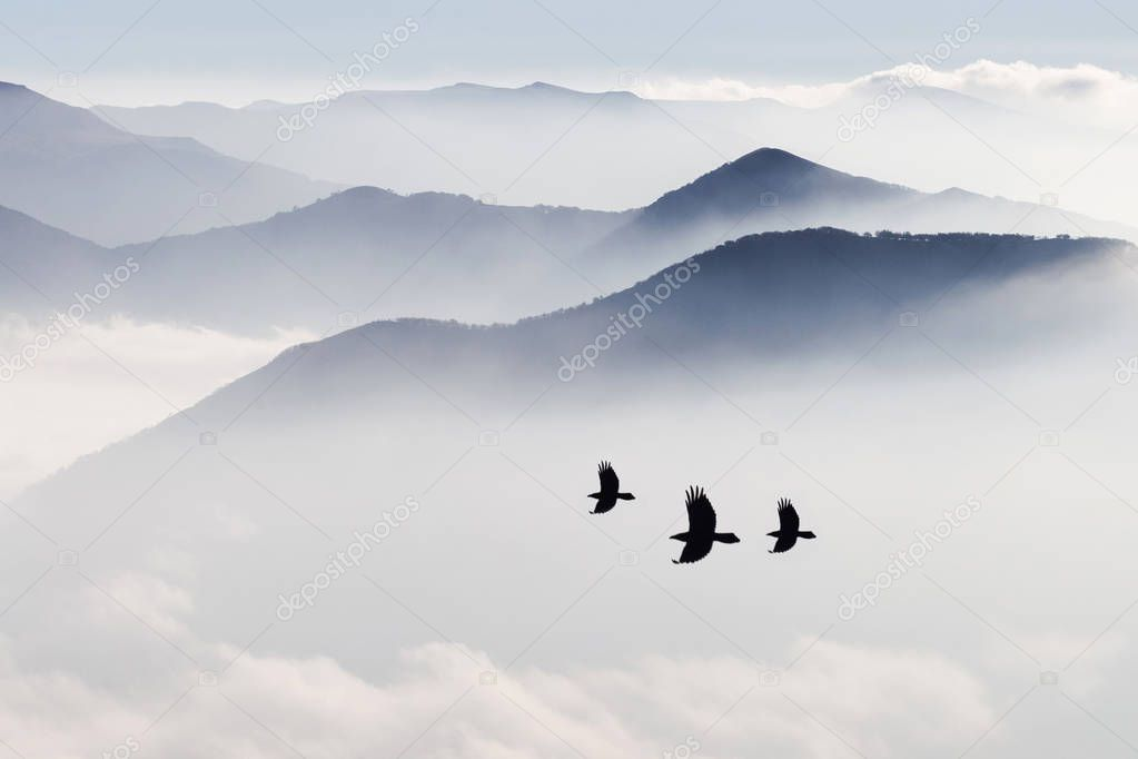 Birds flying in mountains