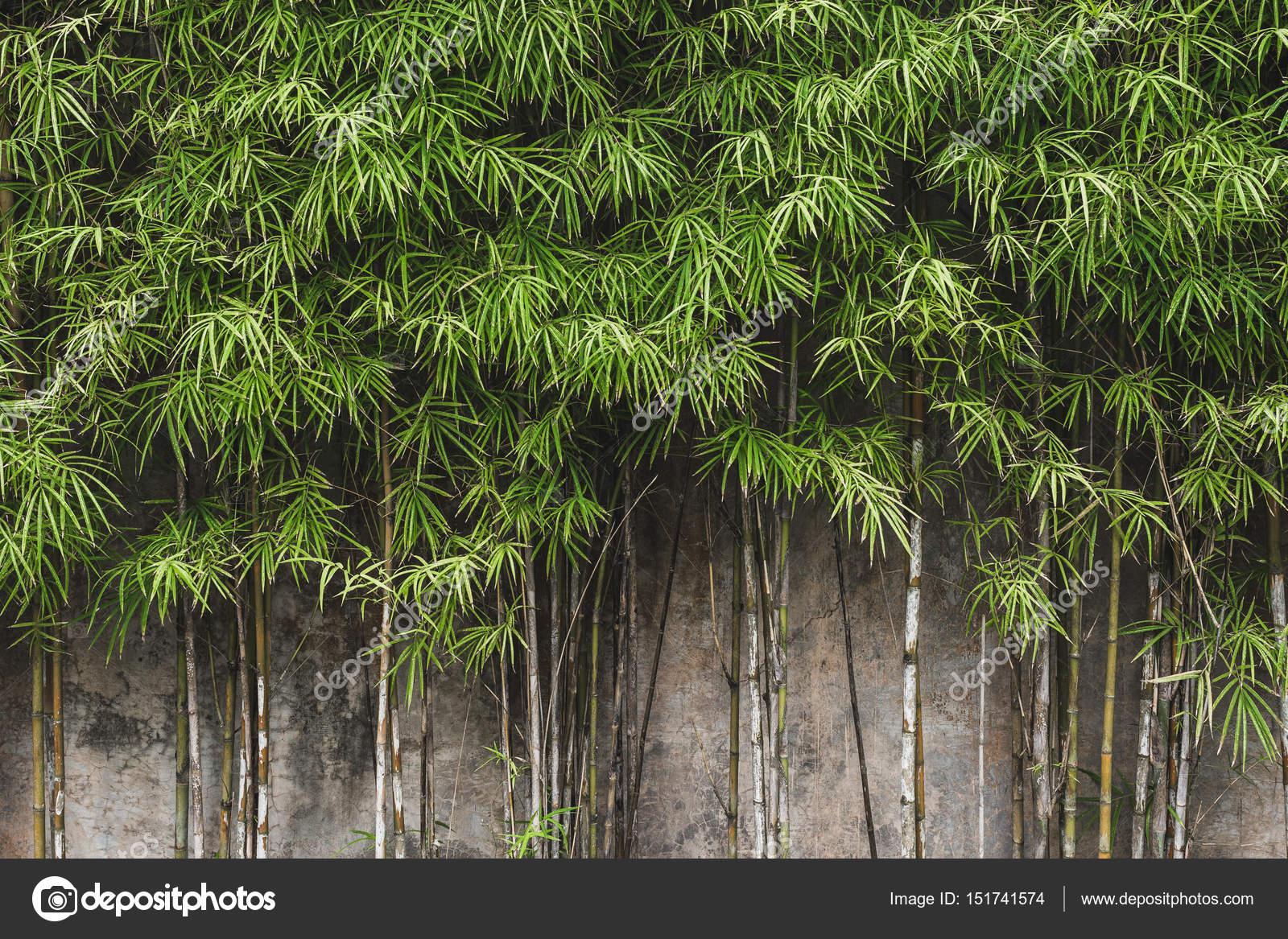 mur de bambou vert photographie olegbreslavtsev 151741574. Black Bedroom Furniture Sets. Home Design Ideas