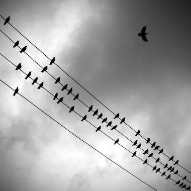 Flying birds. The symbol of freedom.