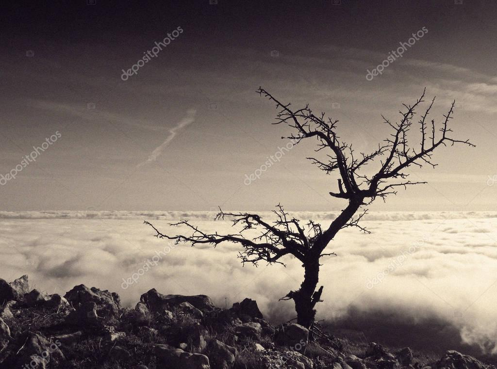 Lonely tree. melancholy mood