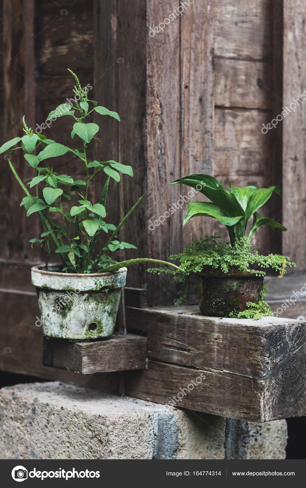 Dekoration des Hauses mit Pflanzen in Töpfen — Stockfoto ...