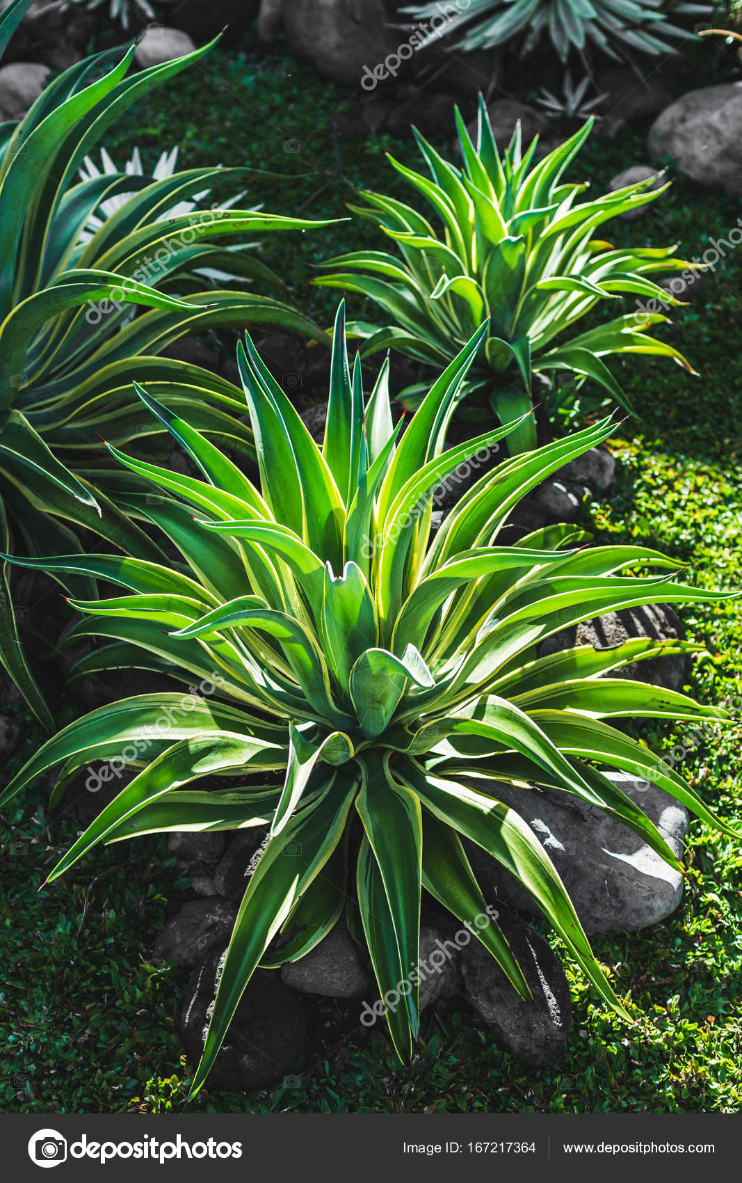 Tropische Pflanzen im Garten — Stockfoto © olegbreslavtsev #167217364