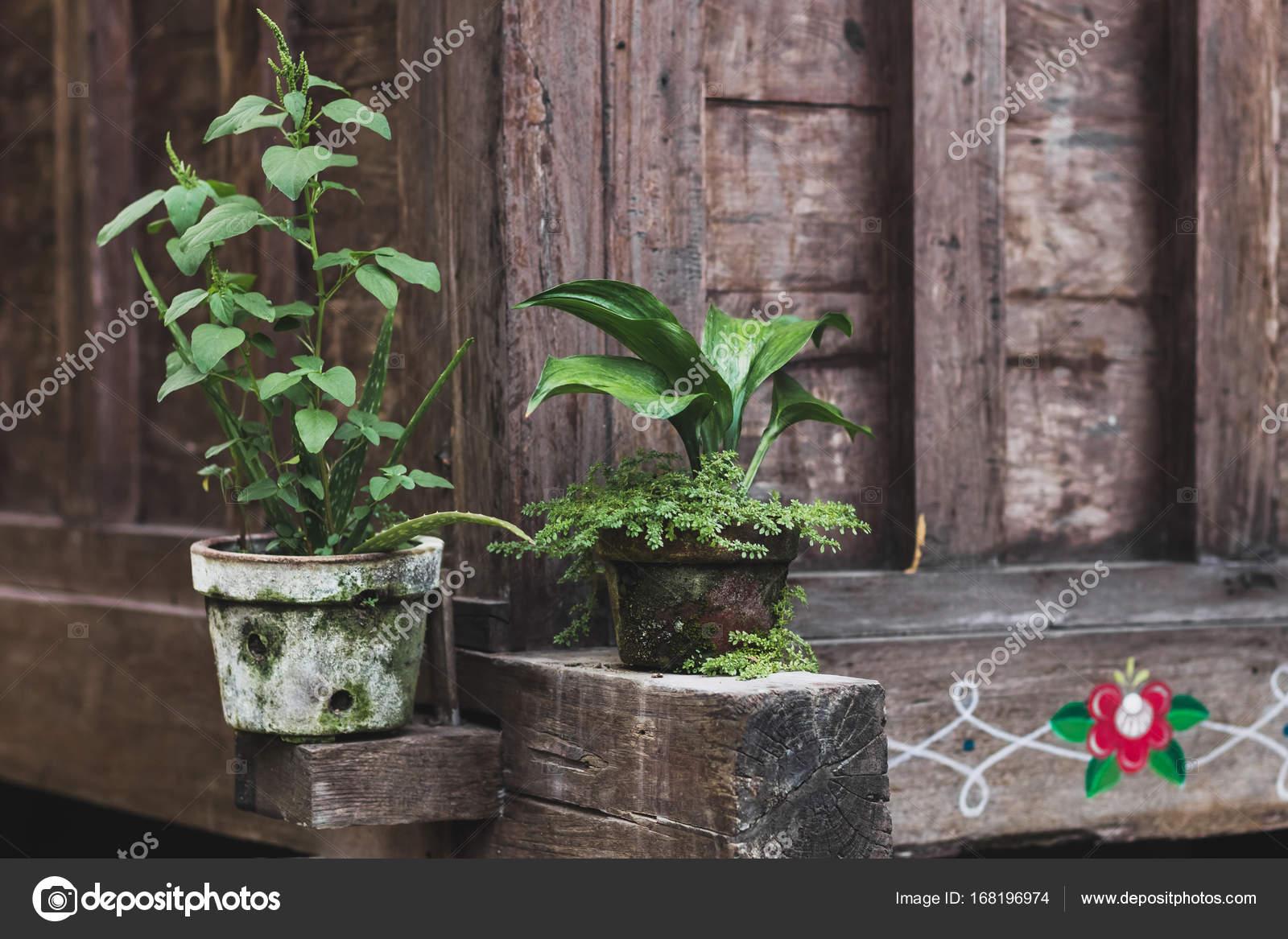 Dekoration des Hauses mit Pflanzen — Stockfoto © olegbreslavtsev ...