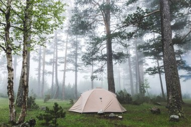 tent in foggy forest