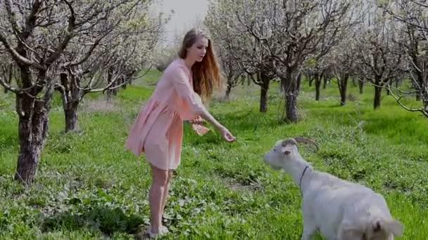 Blondýnka v růžových šatech živí trávy kozu