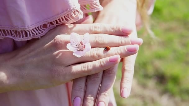 insetto coccinella sulle mani della donna con il fiore