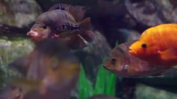Pesci tropicali delloceano in acqua di mare acquario