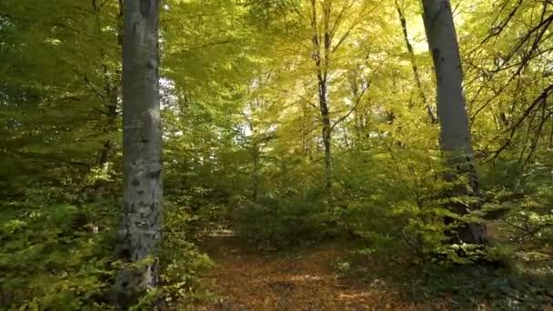 Podzimní les s jasně oranžovými a žlutými listy. Husté lesy ve slunečném podzimním počasí.