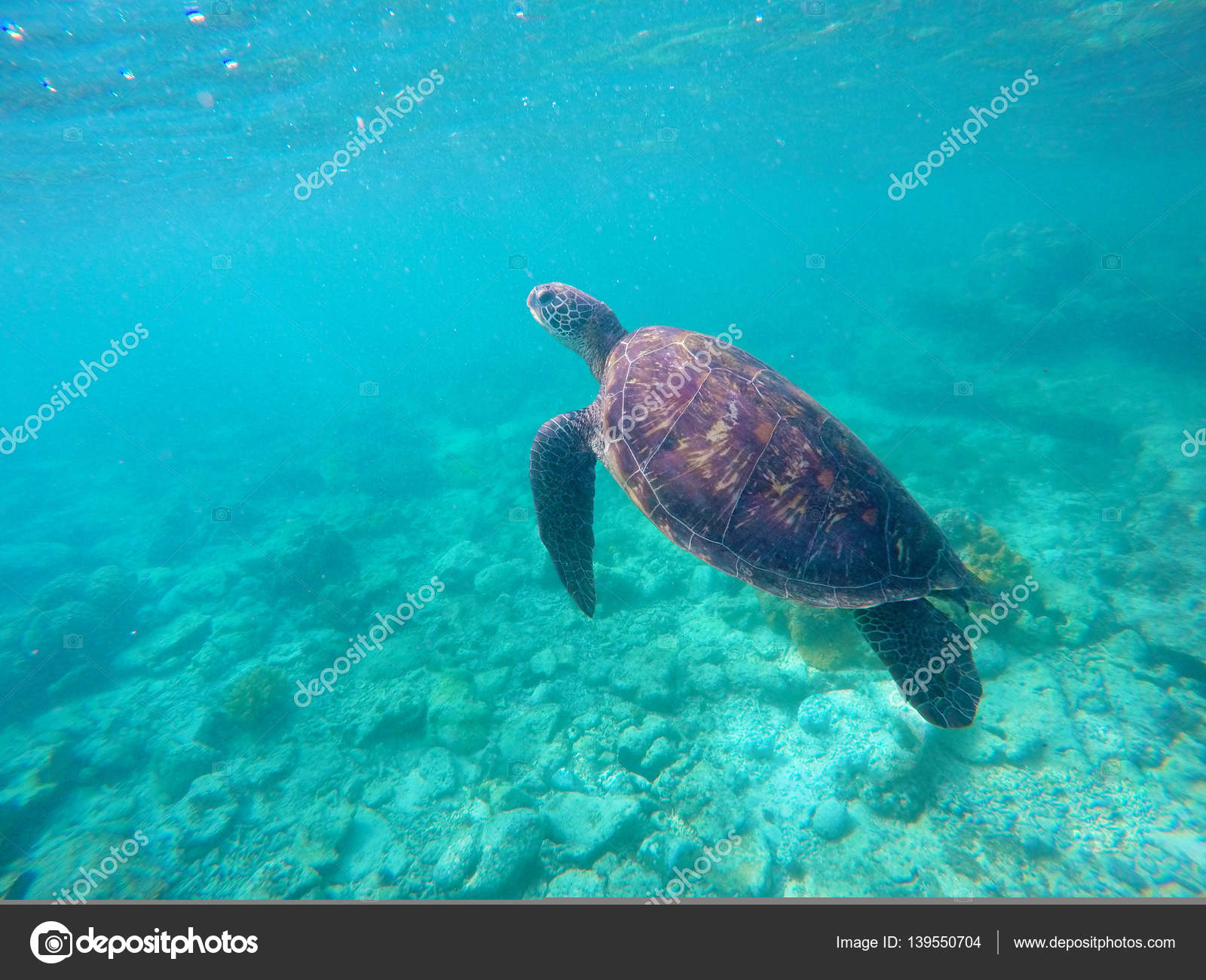 Underwater Photo Of Green Sea Turtle For Banner Template Stock