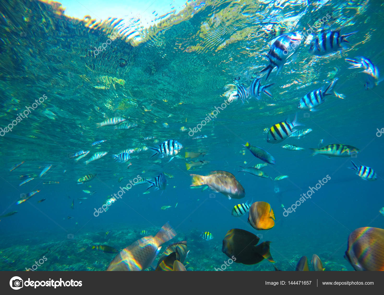 Diverse coral reef fishes in blue water of tropical lagoon. Snorkeling by  exotic island. Coral reef ecosystem. Colorful aquarium fish.