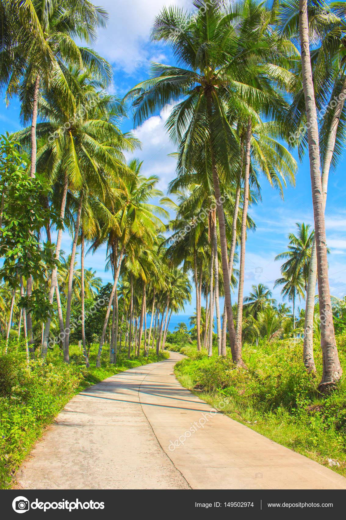 tropische insel landschaft reisen leerer stra e und palmen b ume stockfoto elya q 149502974. Black Bedroom Furniture Sets. Home Design Ideas
