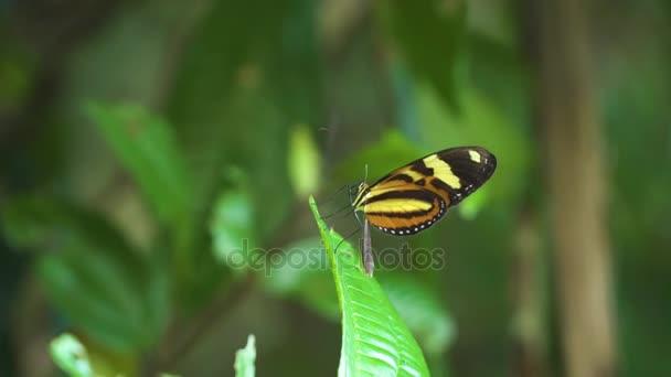 Közeli kép: egy színes pillangó állni a virág- és repülő
