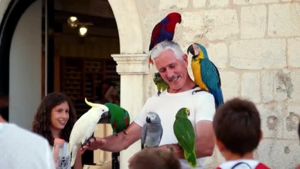 Červenec 2017 - Dubrovník, Chorvatsko. Papoušek seděl na staré usmívajícího se muže ruce a hlavu. Turistická atrakce v staré město Dubrovník. Zpomalený pohyb