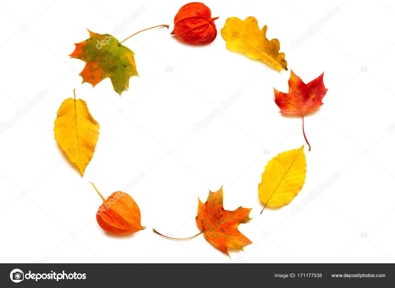 Composición de otoño. Marco hecho de otoño arce hojas y physalis ...