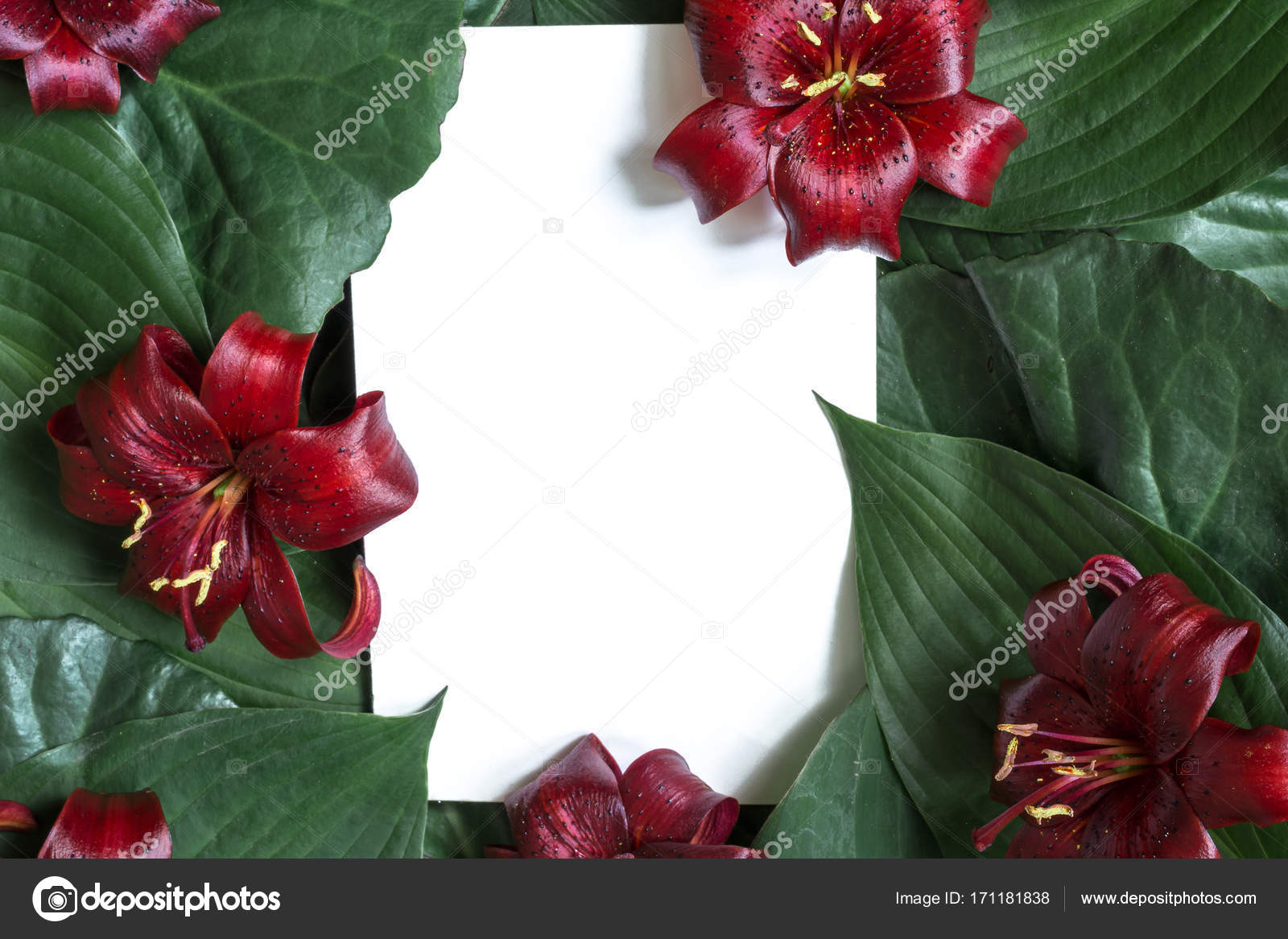 Creative layout made of tropical leaves and red lily flowers with creative layout made of tropical leaves and red lily flowers with blank paper card stock izmirmasajfo Images