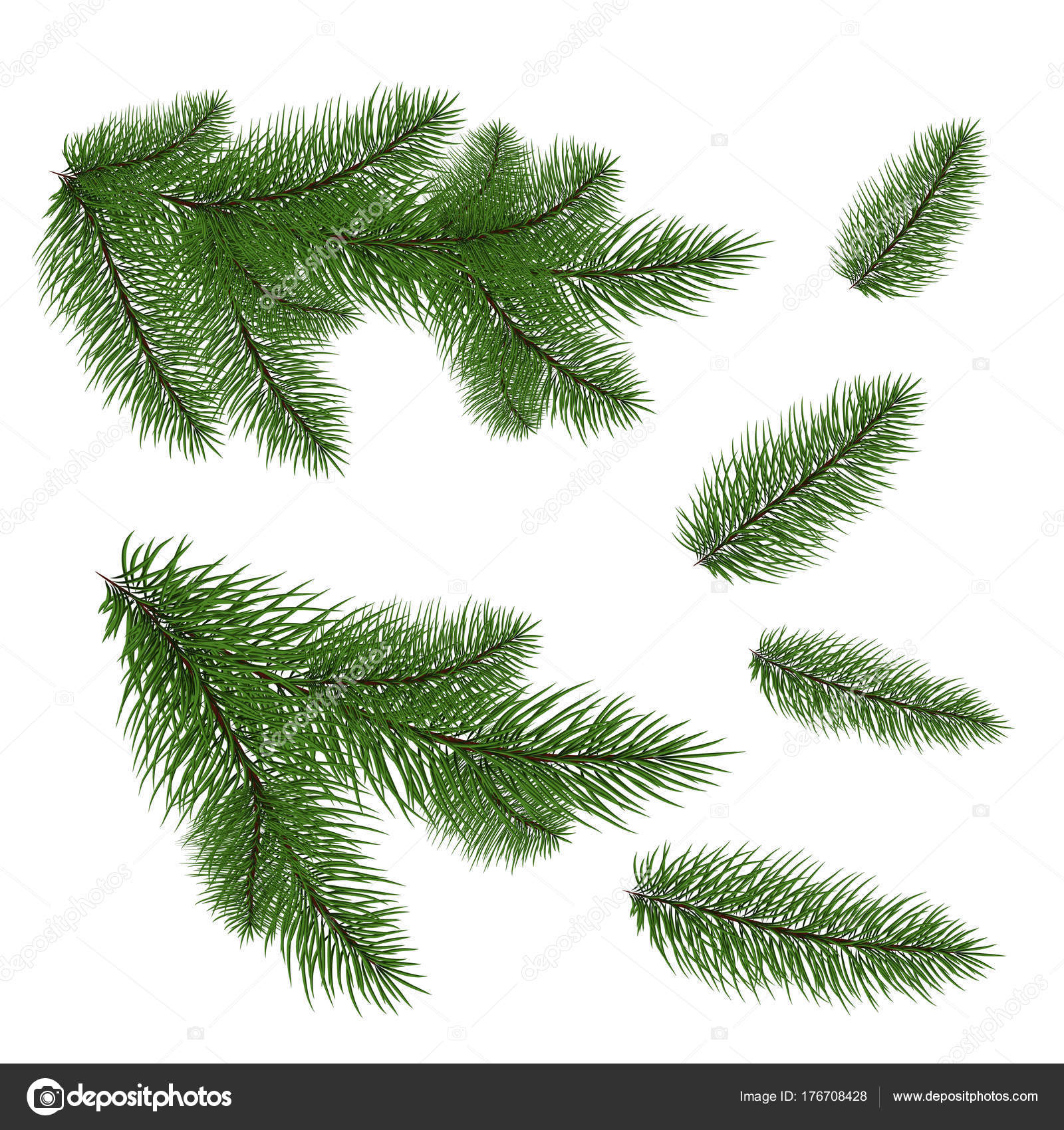 Set Of Christmas Tree Branches For A Decor Close Up Vector Drawing Nature Details By Fosonya
