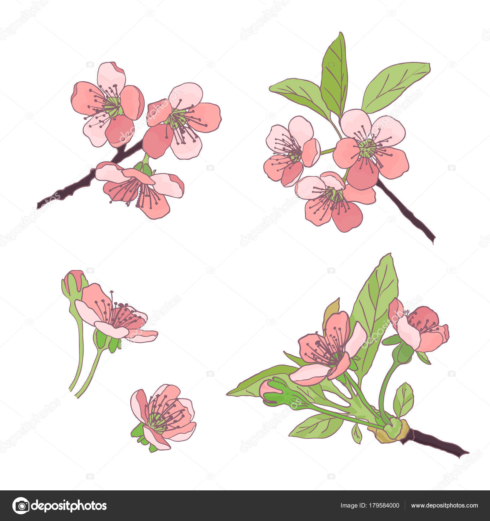 Set cherry blossoms blooming cherry spring flowers drawing set of hand drawn pink flowers cherry blossomsketch vector illustration isolated realistic hand drawing of twigs branches stems with pink flowers and mightylinksfo