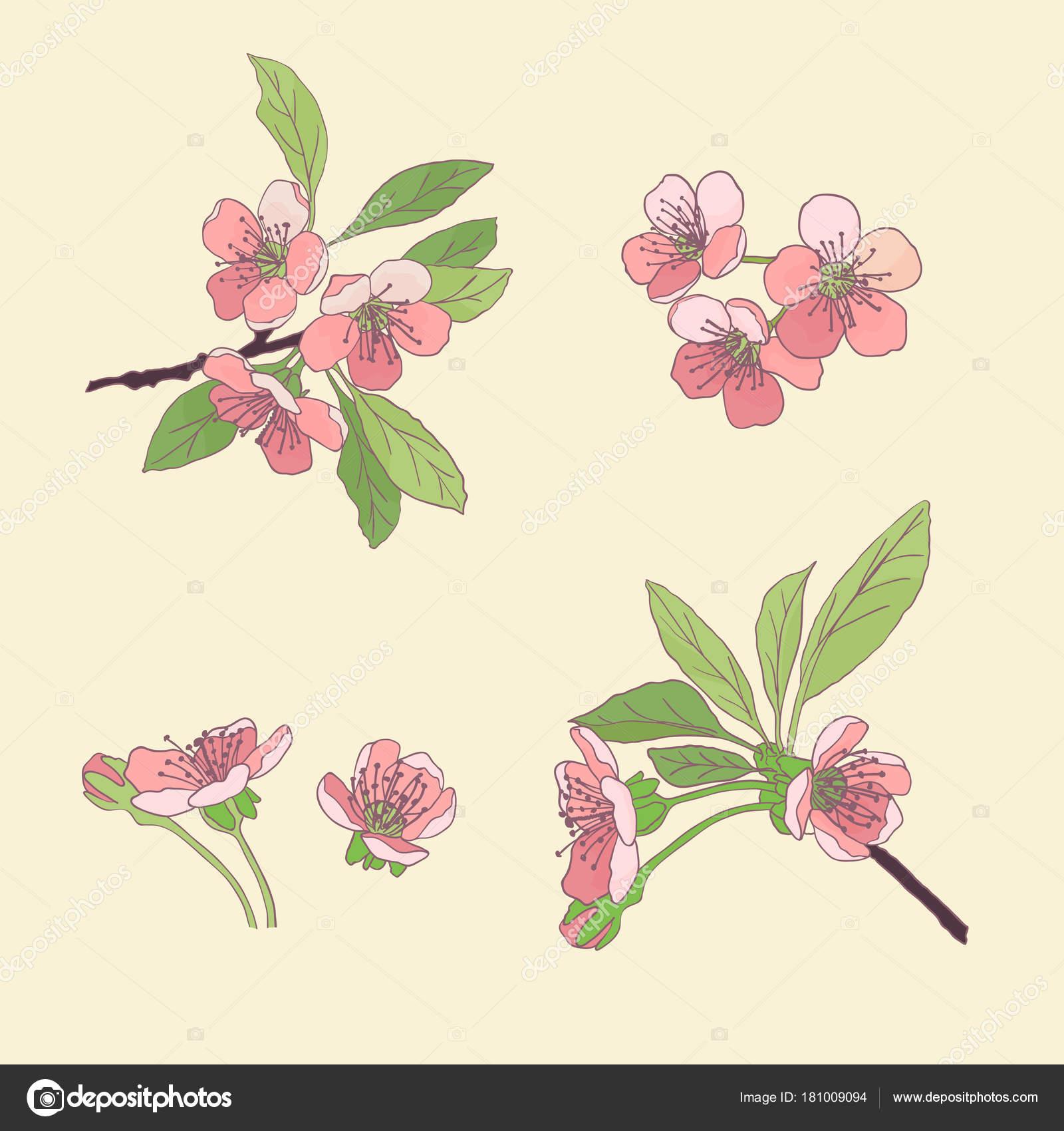 Ensemble Cerisiers En Fleur Fleurs De Cerisier Fleurs De