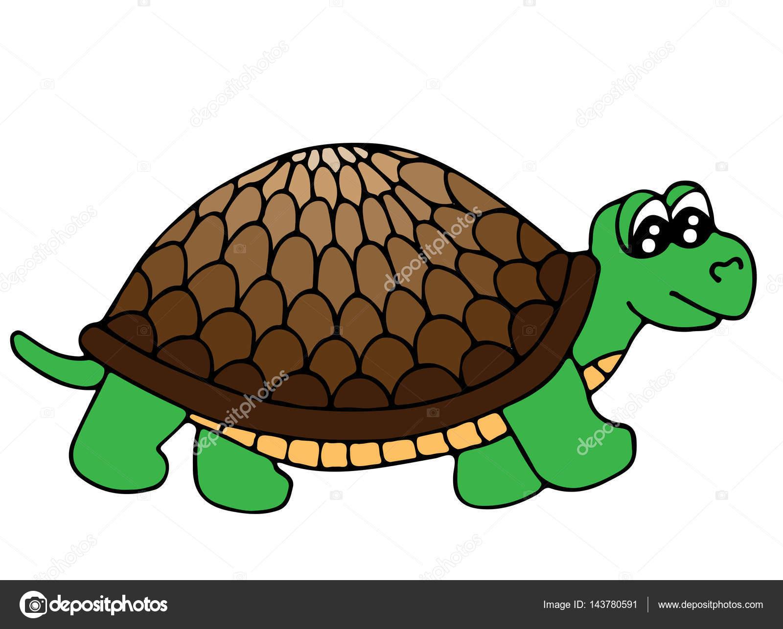 Linda tortuga colores aislado sobre fondo blanco — Archivo Imágenes ...