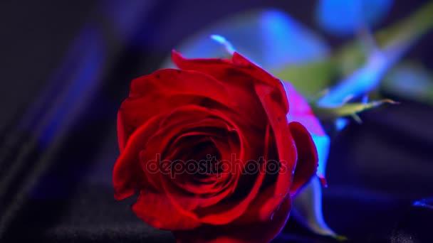 Rote Rosen - Nahaufnahme - das perfekte Geschenk für Frauen