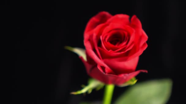 Wonderful shot of a red rose - beautiful background