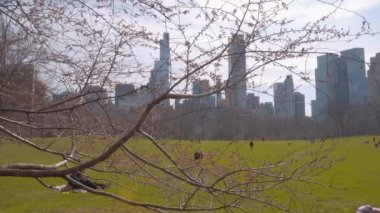 Beautiful meadows and nature at Central Park New York